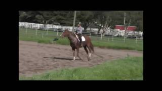 Sound Breeze on the flat-canter work