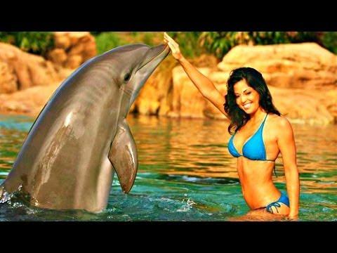 Dolphin Encounters in Nassau, Bahamas