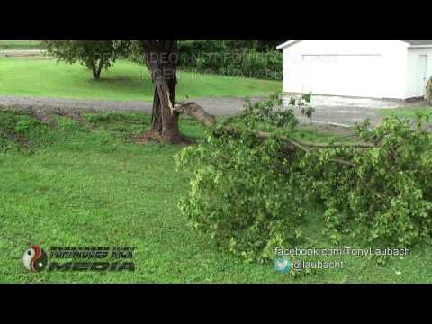 2013-08-09 Union/Massac Counties, IL - Severe Storm Aftermath