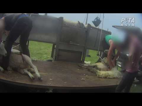 New Footage of the English Wool Industry