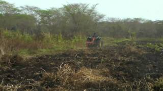 Rented Tractor at work, TRADIEX Agriculture Project, SEBELE, FIZI, D.R.Congo