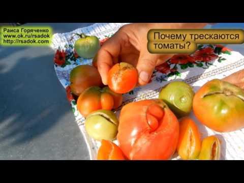 Семена, люпин Дега (РС-1) -