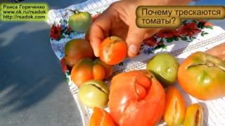Почему трескаются томаты(, 2016-08-02T11:39:13.000Z)