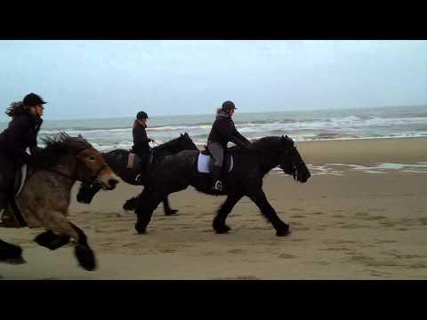 Strandrit Trekpaarden Jan plezier texel