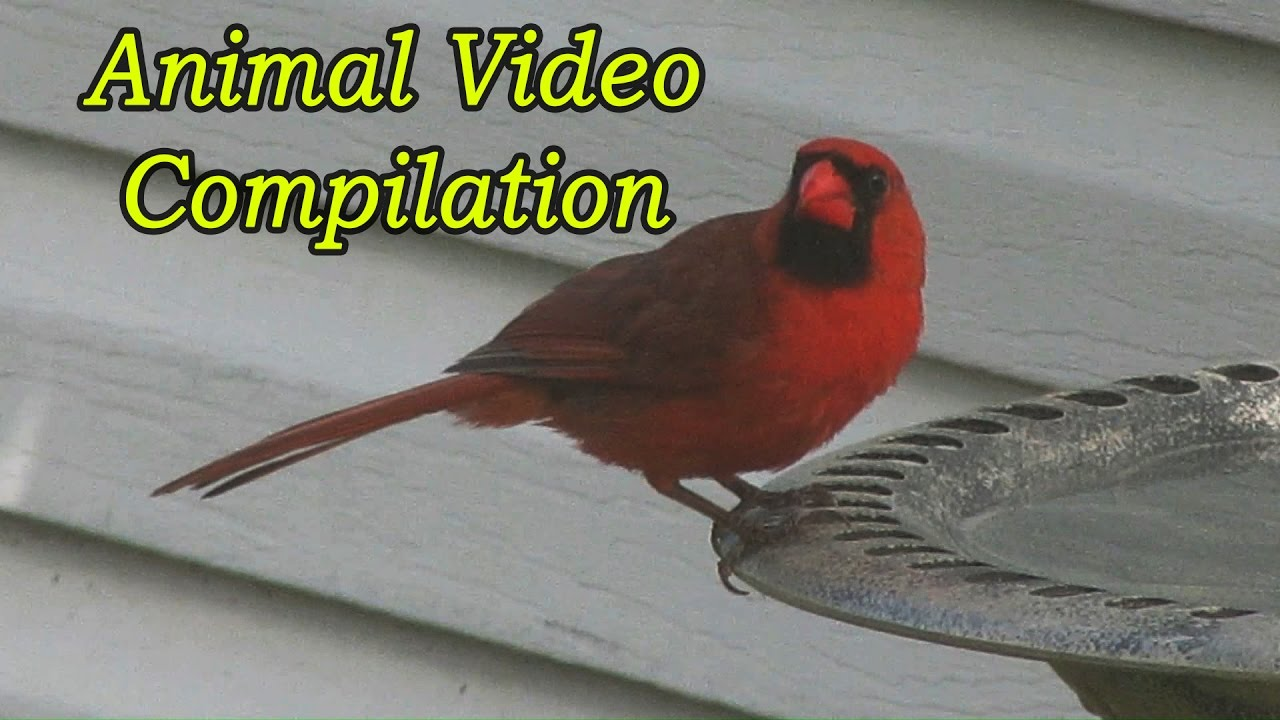 backyard animals a video compilation youtube