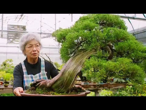 The Art & Philosophy of Bonsai