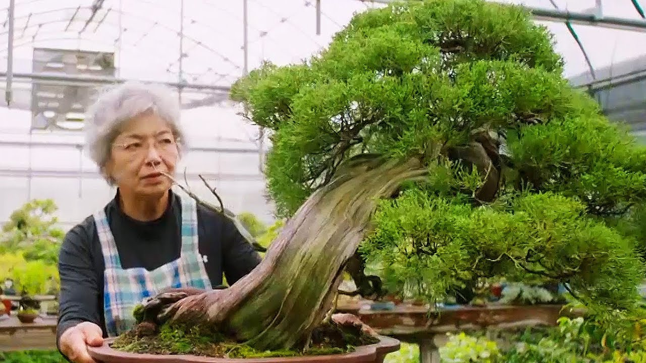 Bonsai The Endless Ritual Extraordinary Rituals Earth Unplugged