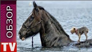 ОБЗОР  ТОП 8  ЖИВОТНЫЕ СПАСАЮТ ДРУГ ДРУГА  РЕАЛЬНОЕ  ВИДЕО