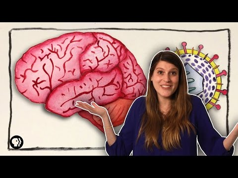 Can Herpes Affect Your Brain 2