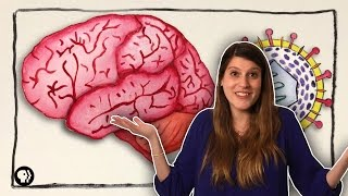 What Can Herpes Do To Your Brain?