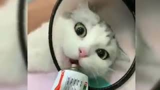 TRY NOT to LAUGH Animals FUNNY PET FAILS Compilation 2019