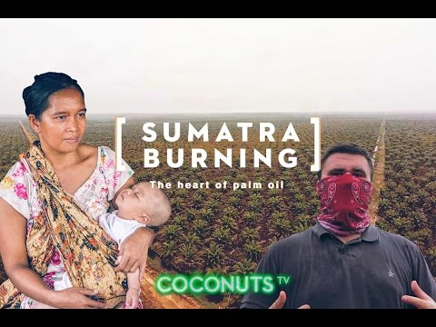 Sumatra Burning: The heart of palm oil (FINAL CUT)