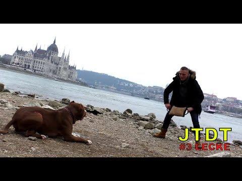 JTDT - The misunderstood Bull breed (XXL pitbull stafford mix-up) ENG
