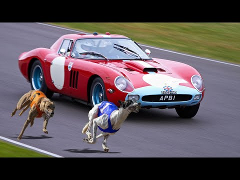 FASTEST Dog Breeds In The World!