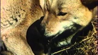 Lovec medvědu DVDRip Czdabing