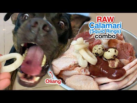 oliang-the-pit-bull-1st-time-eats-🦑calamari&duck-combo-[asmr]-raw-|-mukbang-犬が生の肉を食べる-|-개는-날-음식을-먹는다
