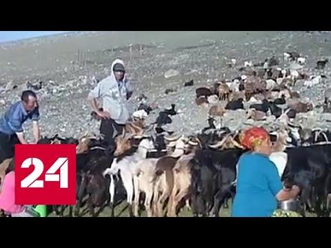 У китайца подтверждена бубонная чума - Россия 24