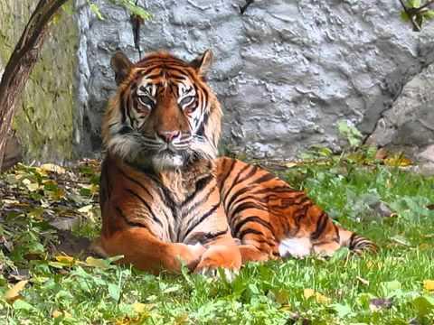 Top 10 My Favorite Animals - YouTube