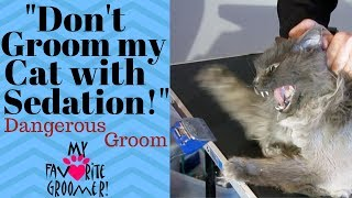 How to groom my old mean matted cat
