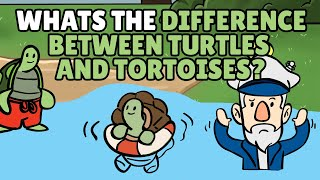 What is the Difference Between Turtles and Tortoises?