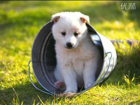 狗图片_可爱的小狗图片欣赏! - YouTube