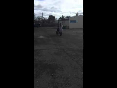 Pitbull Mix Aggressive Best Dog Training in Portland Oregon