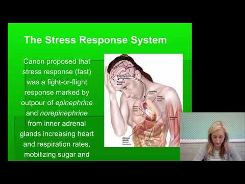 Stress Notes for AP Psychology by Mandy Rice - YouTube