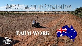 32 Tausend KG Pistazien in 3 Wochen geerntet - Farm Work- #23