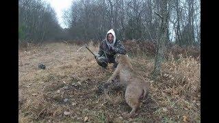 Спасение животных из браконьерских ловушек