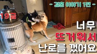 EP.01 강아지 결혼이야기 1편 / 시바견쯔카유 / …