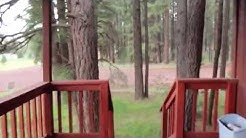4 Bedroom Cabin in Pinedale AZ for Sale!