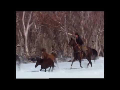 brumby running scenes