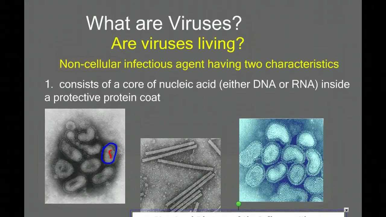 an introduction to viruses Viruses with the exception of newly discovered prions, viruses are the smallest agents of infectious disease most viruses are exceedingly small (about 20 - 200 nanometers in diameter) and essentially round in shape.