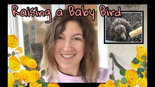 Raising an Abandoned Baby Dove | Kelsey_tube