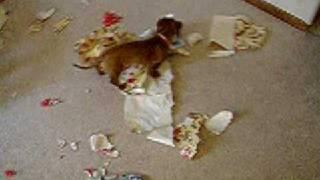 Dachshund Paper Shredder