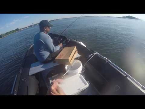 porgy fishing in the bronx city island