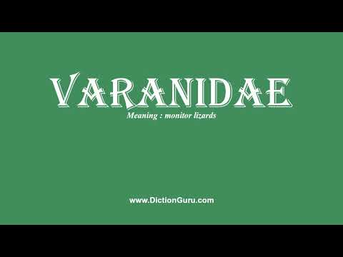 How to Pronounce varanidae with Meaning, Phonetic, Synonyms and Sentence Examples