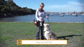 Dog Training Using Rufus & Coco Training Clicker And Whistle