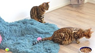 Mother cat Can't leave her Pregnant Daughter alone