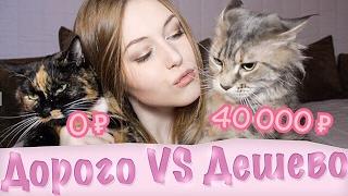 видео Почему породистый котенок не может стоить дёшево