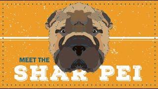 SharPei | CKC Breed Facts & Profile