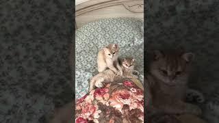 Котята делают массаж!!