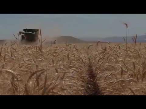 Wheat Grower Survey