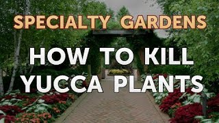 How to Kill Yucca Plants