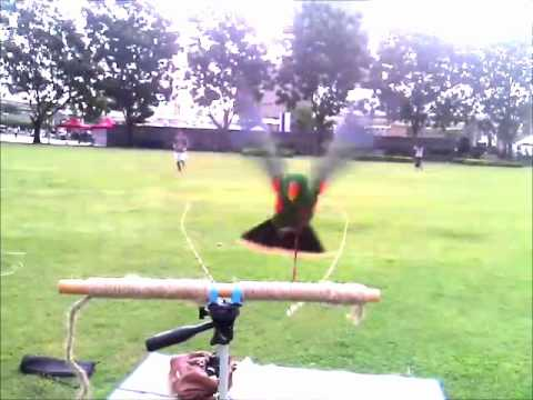 KIWI – 4 Months Eclectus Parrot Free Flight with Harness
