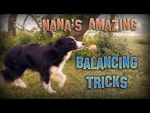 Nana the Border Collie's Amazing Balancing Tricks