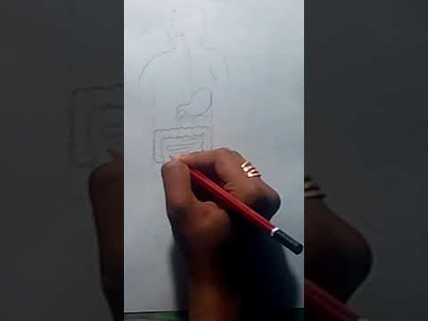 how to draw human alimentary canal