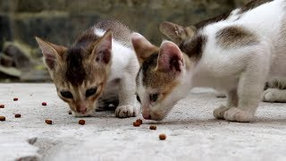 Cute Kitten Cleaning Itself After Meal - Cats Make Me Happy