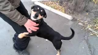 найдена собака в ошейнике у лен.адм. 3.09 411221 татьяна ч1