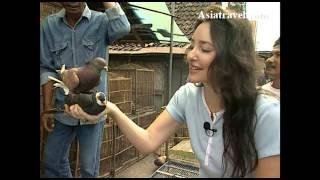 Bird Market, Yogyakarta by Asiatravel.com